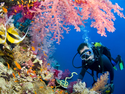 Visit earth s coral reefs while you still can hmh - Dive recorder results ...