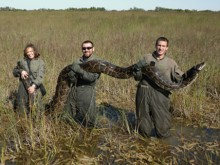 Everglades wildlife researchers holding giant python